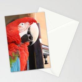 Margaritaville Parrot Stationery Cards