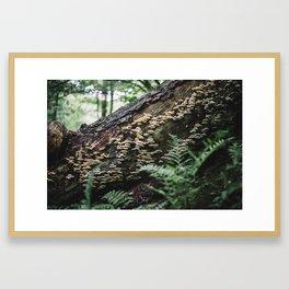 Flora and Fungi Framed Art Print