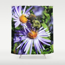 Pollen Dusted Bee on Asters Shower Curtain