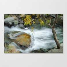 The tree and the river Canvas Print