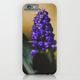 Grape Hyacinths Flower iPhone Case