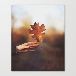 Catching a bit of Autumn Canvas Print
