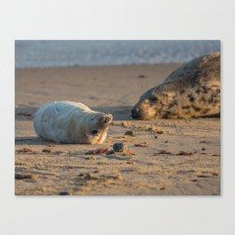 Grey Seal mum and pup Canvas Print