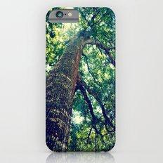 lookingup2 iPhone 6 Slim Case