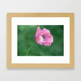 Pink Poppy Profile Framed Art Print