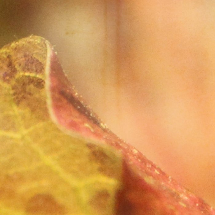 Faded Water Leaf  - JUSTART © Leggings