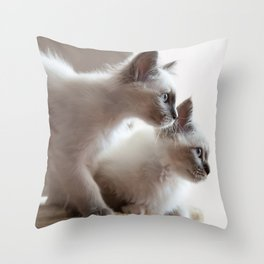Portrait of two white long hair birman cats with blue eyes. Throw Pillow