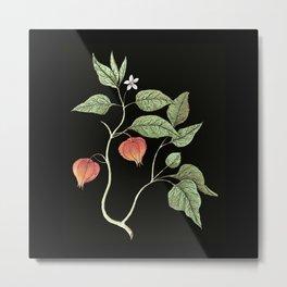 Physalis - lantern flower Metal Print