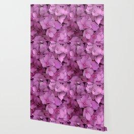 Pink hydrangea Wallpaper
