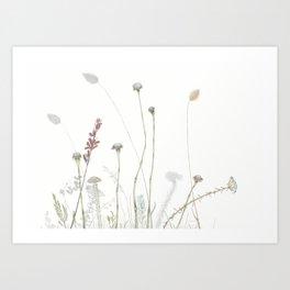 Liebetland Flowers Amongst The Fynbos, 2018 Art Print