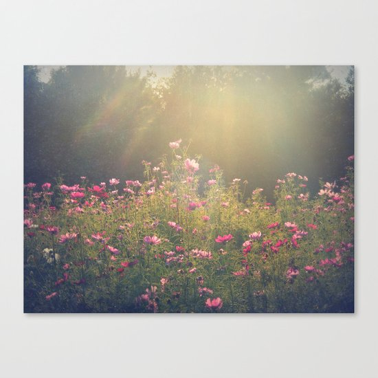 Cosmos in the Late Day Sun Canvas Print