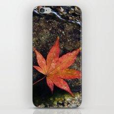 Japanese Maple Leaf 1 iPhone & iPod Skin