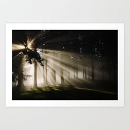Boring Forest Art Print