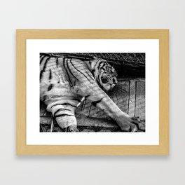 Tiger kingdom Framed Art Print