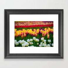 Fields of Color III, Woodburn Tulip Festival Framed Art Print