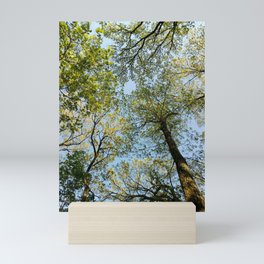 Lookng up big hill park Mini Art Print