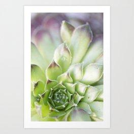 Succulent No. 1 Art Print