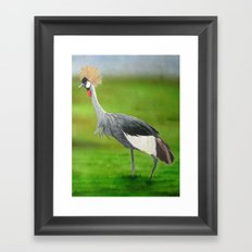 Crested Crane Framed Art Print