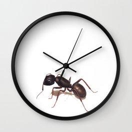 Ant by Lars Furtwaengler | Colored Pencil / Pastel Pencil | 2014 Wall Clock