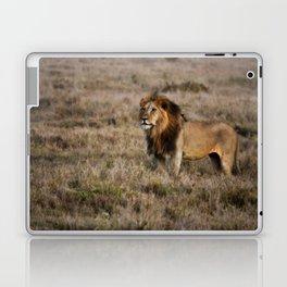 African Lion in Kenya Laptop & iPad Skin