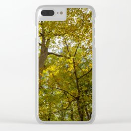 Fall Yellow Trees Clear iPhone Case