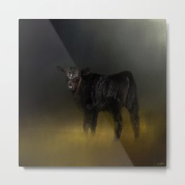 Black Angus Calf In The Moonlight Metal Print