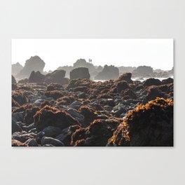 MacKerricher Tide Pools Canvas Print