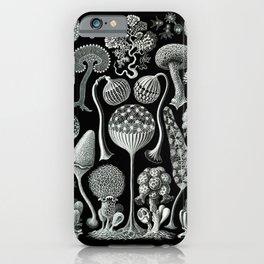 Ernst Haeckel - Mycetozoa (black) iPhone Case