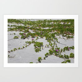 Railroad Vines on Boca II Art Print