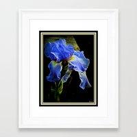 iris Framed Art Prints featuring Iris by elkart51