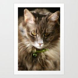 Requisite Cat Picture Art Print
