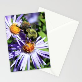 Pollen Dusted Bee on Asters Stationery Cards