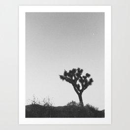 JOSHUA TREE XII Art Print