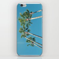 palm tree iPhone & iPod Skins featuring Palm tree by Laura James Cook