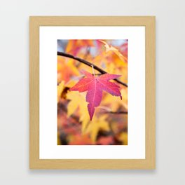 Autumn Still Framed Art Print