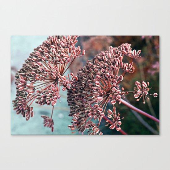FLOWERHEAD - Botanical Garden Canvas Print