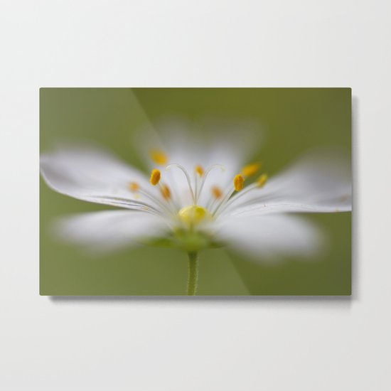 Softly Stitchwort Metal Print