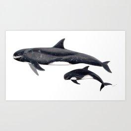 Pygmy killer whale Art Print