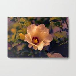 Sunset Cinnamon Rose Metal Print