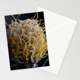 Grevillea Australian Native Photography Art Print Stationery Cards