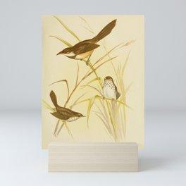 Vintage Print - The Birds of Australia (1891) - Scrub-Birds Mini Art Print