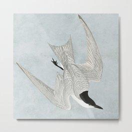 Tern Metal Print