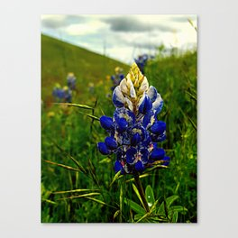BLUES FOR A RAINY DAY Canvas Print