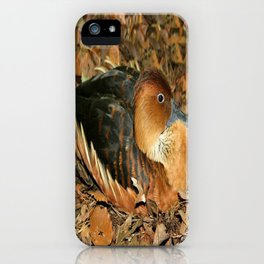Fulvous Whistling Duck iPhone Case
