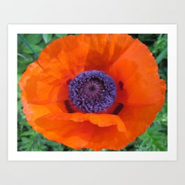 Poppy Portrait Art Print