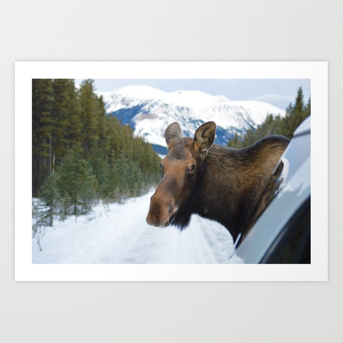 Beautiful Moose In Jasper National Park Art Print By Western Wanderlust Society6