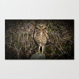 Western Burrowing Owl Canvas Print