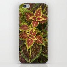 Coleo Coleus iPhone & iPod Skin