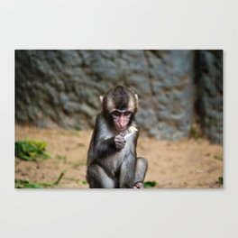 Japanese Macaque Monkey Canvas Print