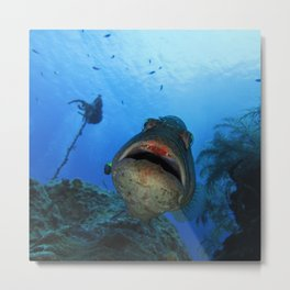 Big Nassau Grouper Metal Print